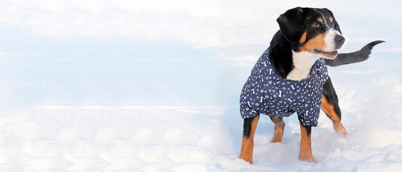 собака крупной породы в одежде
