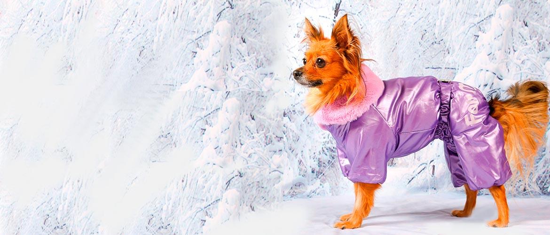 Маленькая собака в красивой одежде