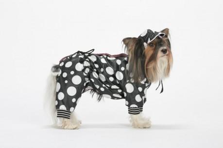 """Комбинезон """"Горох"""" утепленный для собак купить"""