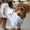 """Кофта-платье для собак Is Pet """"Мишка"""""""