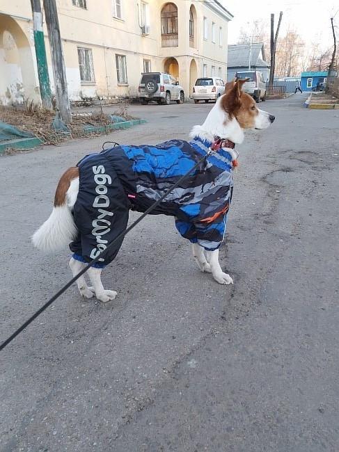 Фото клиента нашего интернет магазина - собака в одежде