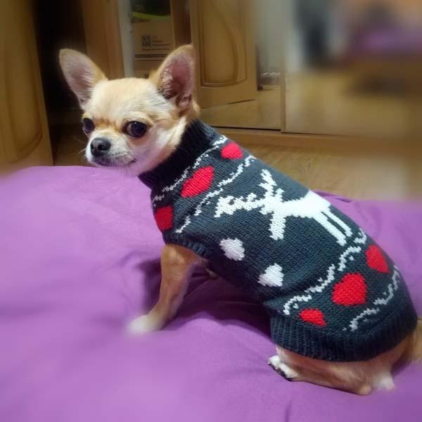 Фото клиента собачка в одежде