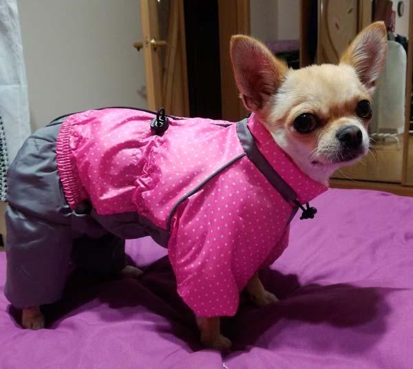 Фото клиента собака в кофте