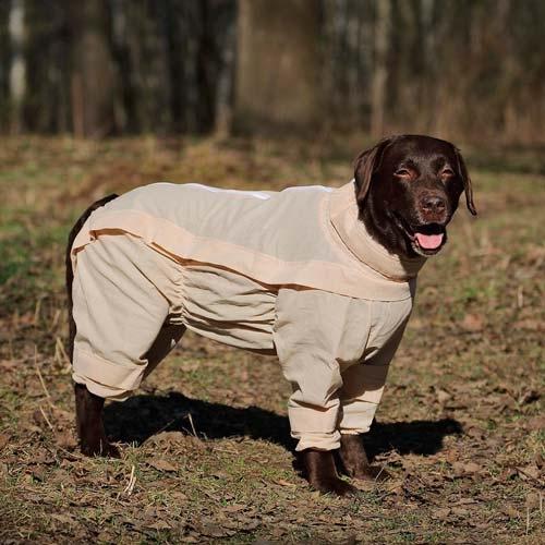 Фото собака в комбинезоне с ловушками от клещей
