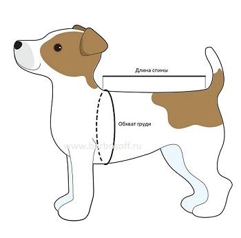 Как измерить собаку для определения размера одежды