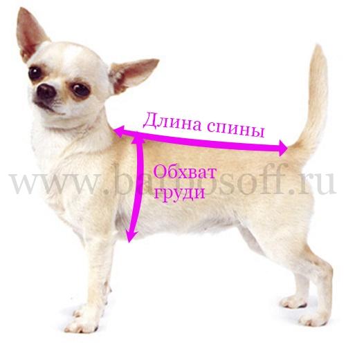 Как снять мерки с собаки при покупки одежды