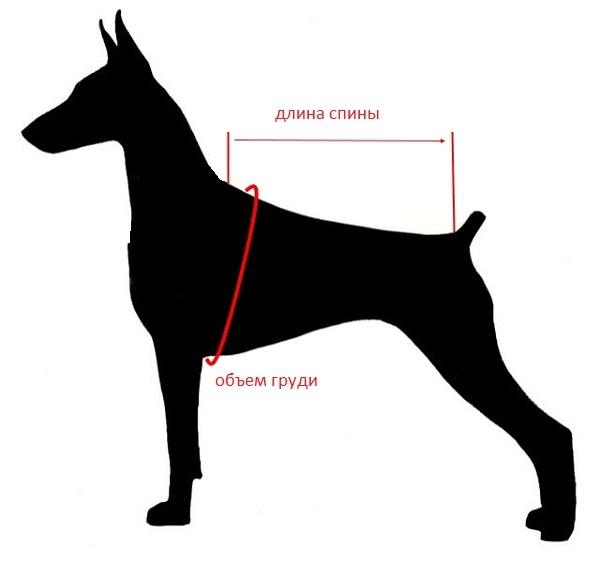 Картинка как снять мерки с собаки