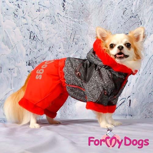 Фото собака в зимним комбинезоне