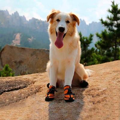 Фото: собака в обуви